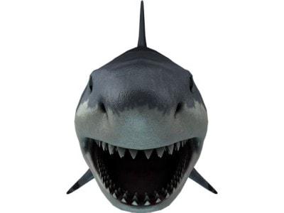 正面を向くサメ
